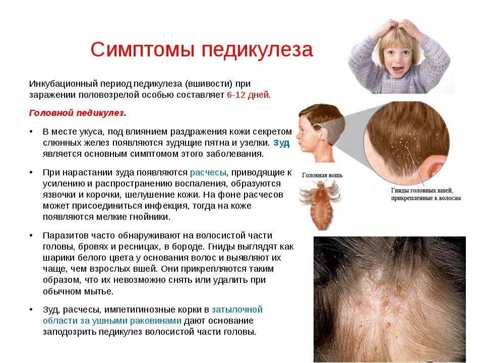Педикулез (вшивость): симптомы, лечение, профилактика — онлайн-диагностика