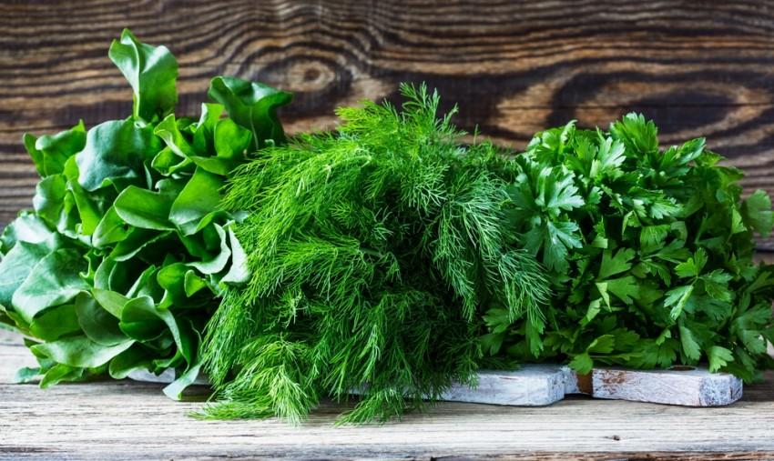 Укроп: как выглядит, где растет, что это такое – овощ или трава, многолетний ли, к какому семейству относится, и характеристики, фото цветов с листьями, как у него