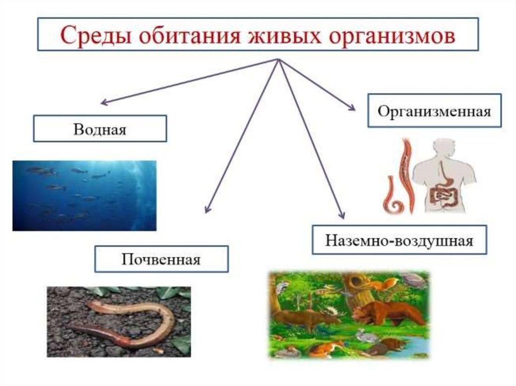 Среда обитания — традиция