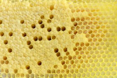 Пчелиные соты: польза и вред для организма человека, как правильно применять