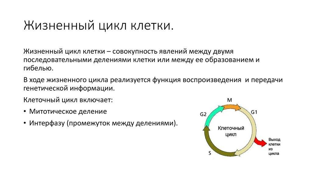 Клеточный цикл — википедия с видео // wiki 2