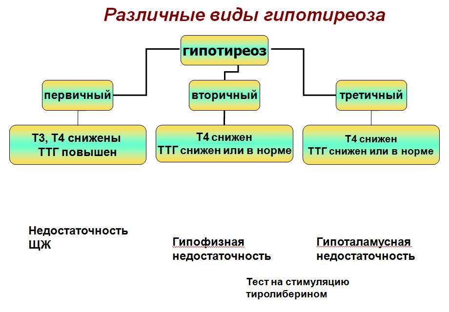 Тиреотропный гормон (ттг) – гормоны щитовидной железы – расшифровка анализов онлайн