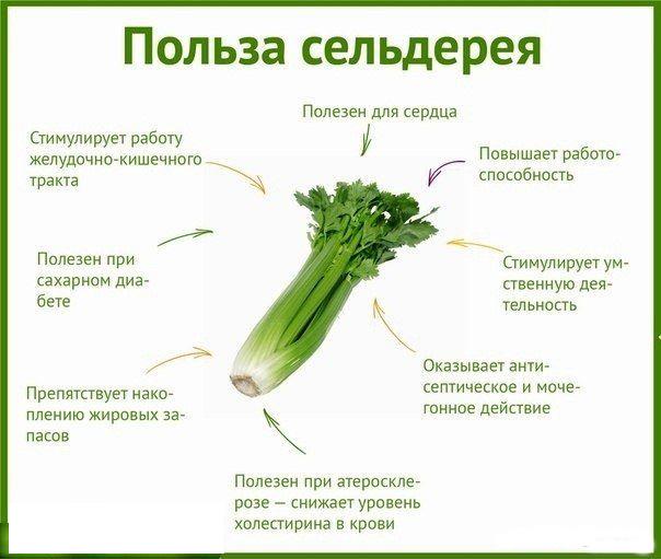 Как едят сельдерей? 30 фото как готовить и употреблять в пищу, что можно сделать со стеблями в сыром виде