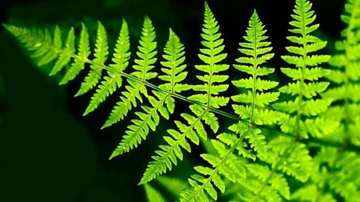 Первыми наземными растениями были... первые растения на земле