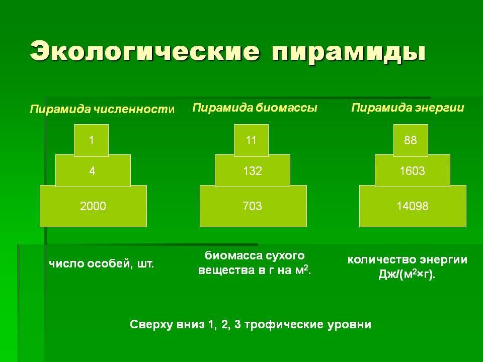 """Конспект """"цепи и сети питания. экологическая пирамида"""" - учительpro"""
