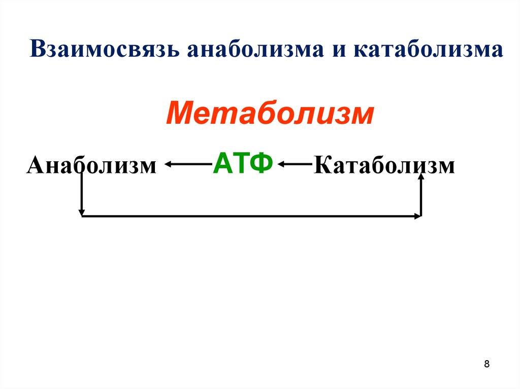 Катаболизм мышц что это такое простым языком