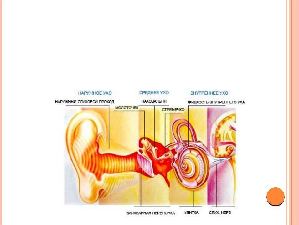 Что такое сенсоневральная тугоухость: симптомы и лечение