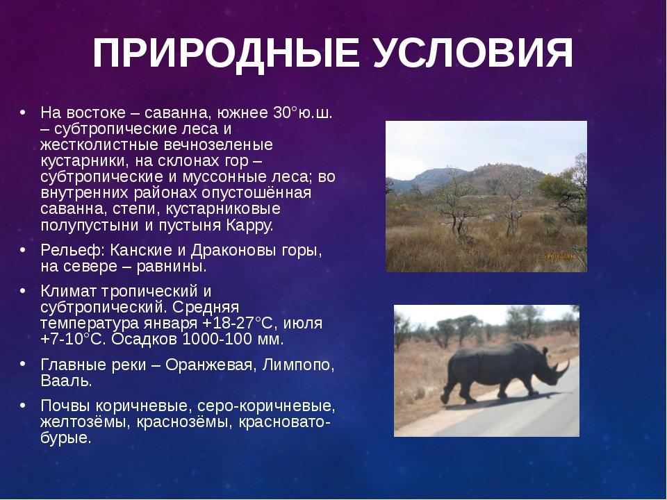 Саванна — википедия с видео // wiki 2