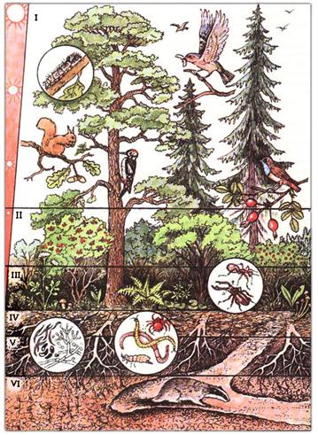 Биология - biology - qwe.wiki