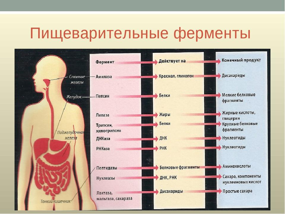 Ферментная недостаточность.симптомы ферментной недостаточности