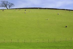 Пастбище: правила создания и подготовки территории к выпасу скота