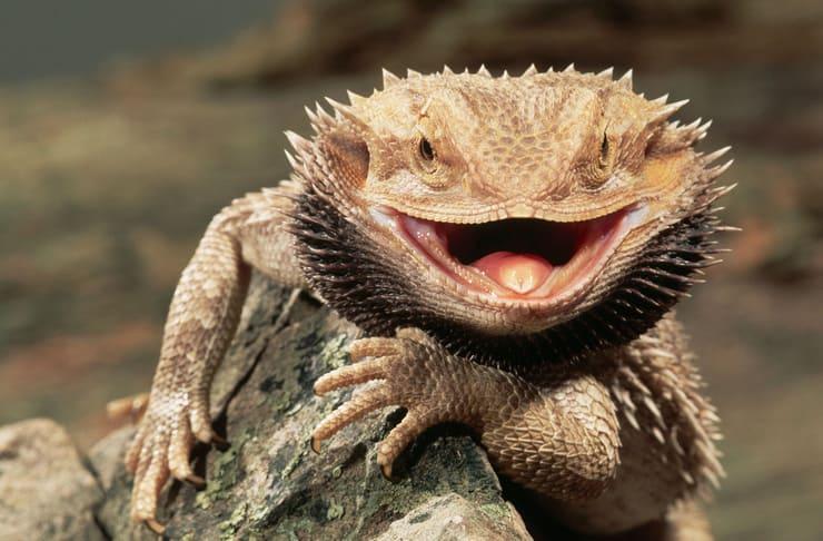 Рептилии - это... рептилии: фото