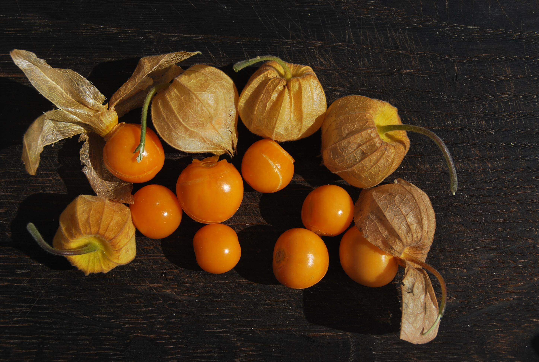 Физалис - что это? физалис: выращивание, посадка и уход, сорта и приготовление блюд из овощного физалиса - цветочки - медиаплатформа миртесен