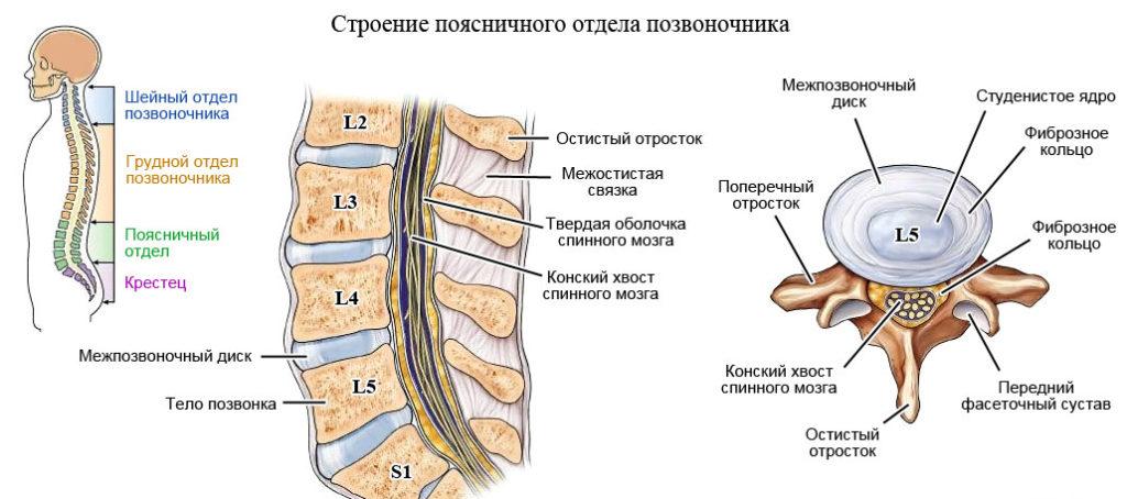 Протрузия межпозвонковых дисков поясничного отдела позвоночника: симптомы, лечение, операция