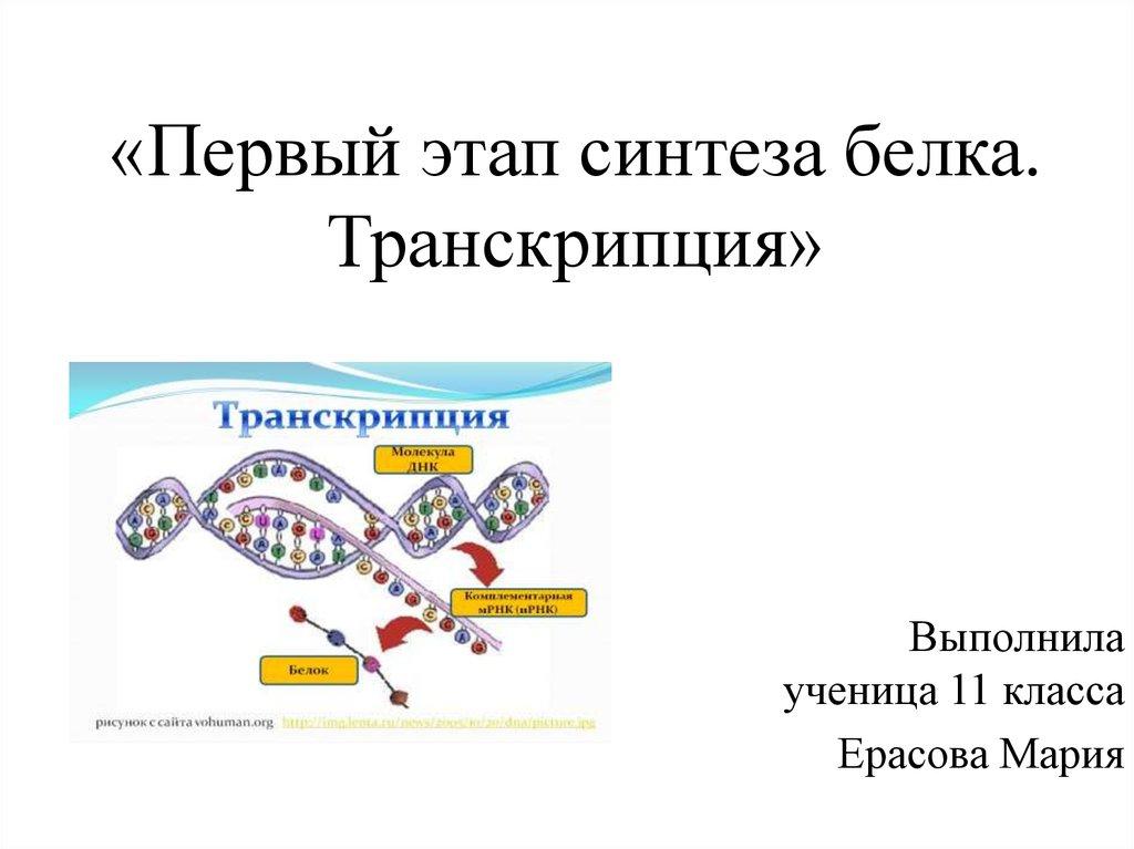 Что это - транскрипция в биологии, ее значение в жизнедеятельности организмов