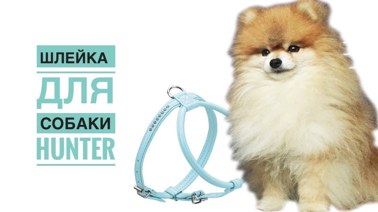 Шлейка (собачья) — википедия. что такое шлейка (собачья)