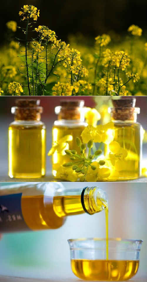 Рапсовое масло вред и польза! как употреблять?