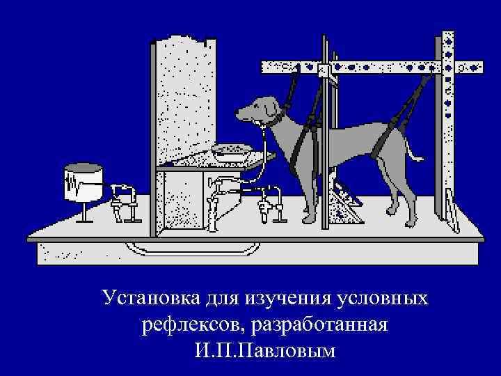 Эксперимент «собака павлова»: цель и ход эксперимента, полученные результаты и примеры из жизни.