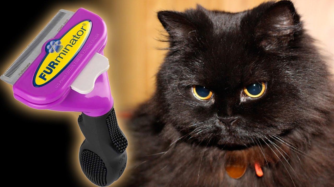 Забываем о кошачьей шерсти, или что такое расческа фурминатор