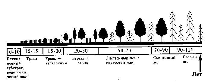 Сукцессия экологическая – виды и процессы | первичная и вторичная сукцессия