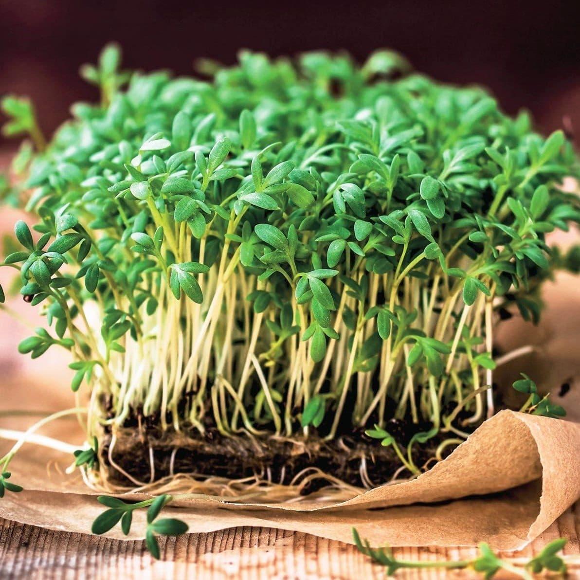 Кресс-салат: польза и вред для здоровья | польза и вред