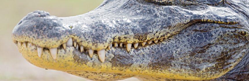 Всё, что нужно знать о крокодилах. интересные факты о крокодилах