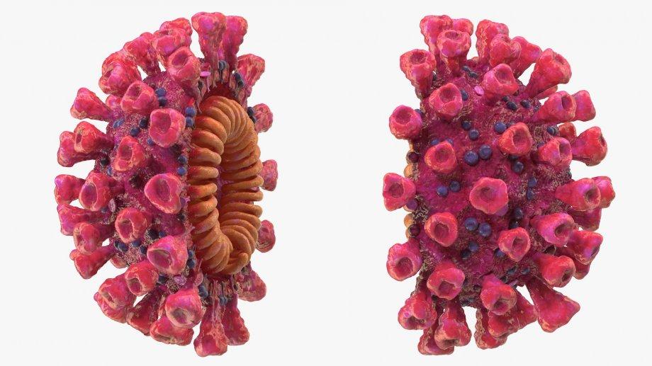 Очная вставка: откуда в sars-cov-2 фрагмент человеческого гена | статьи | известия
