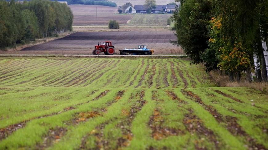 Что такое хозяйство? типы и виды хозяйства