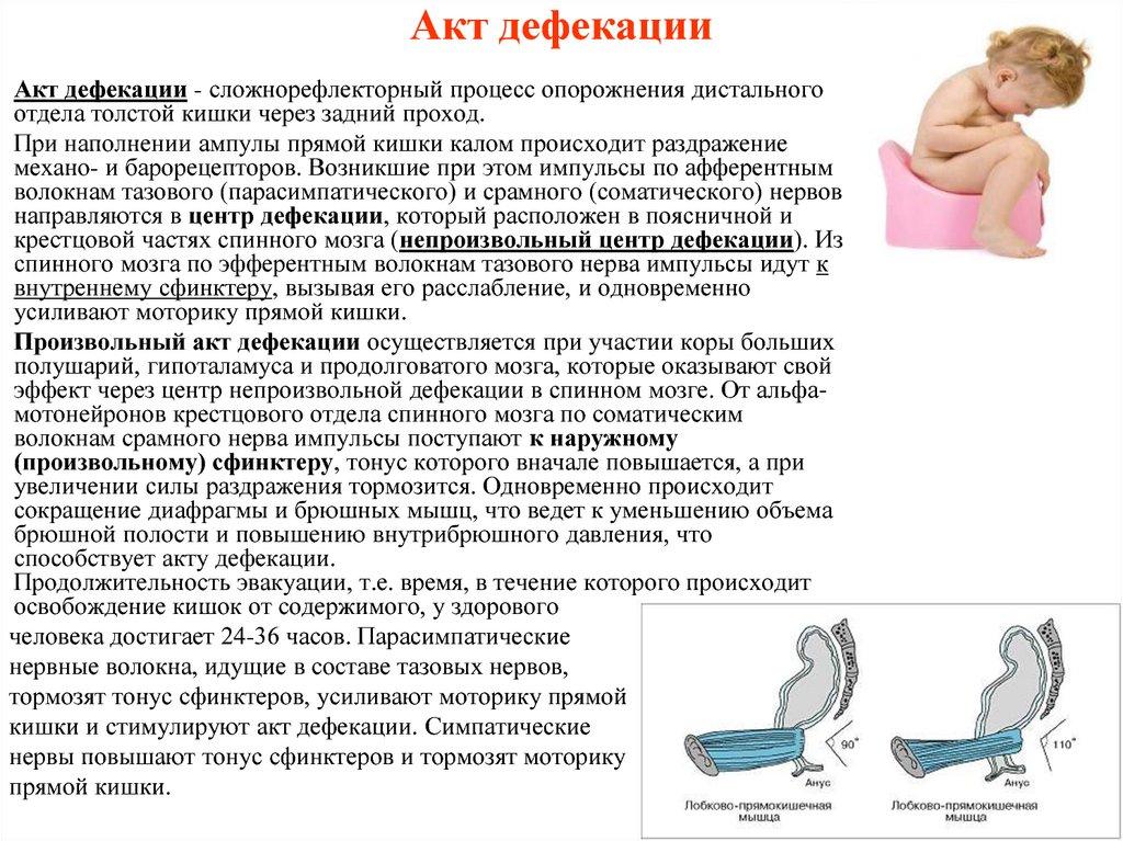 Дефекация. нарушение дефекации, причины, симптомы и лечение!