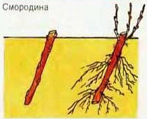 Проростки: «живая» еда
