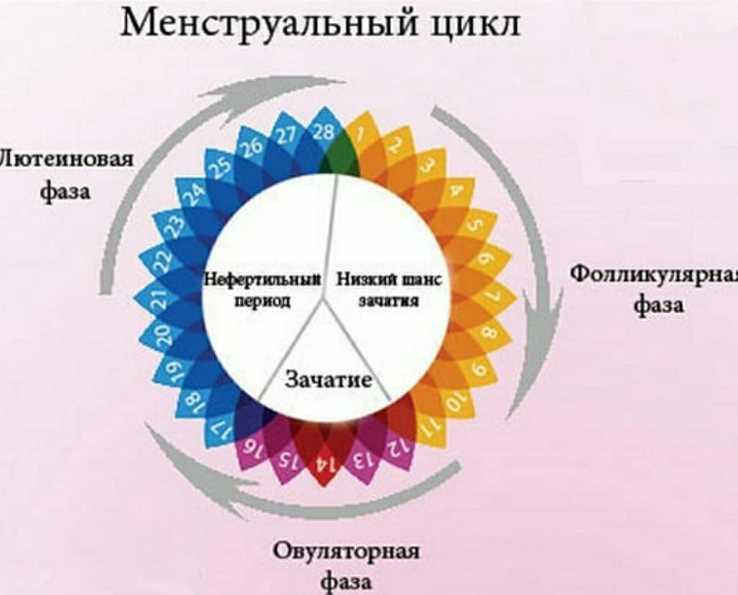 Лютеиновая фаза и ее недостаточность :: syl.ru