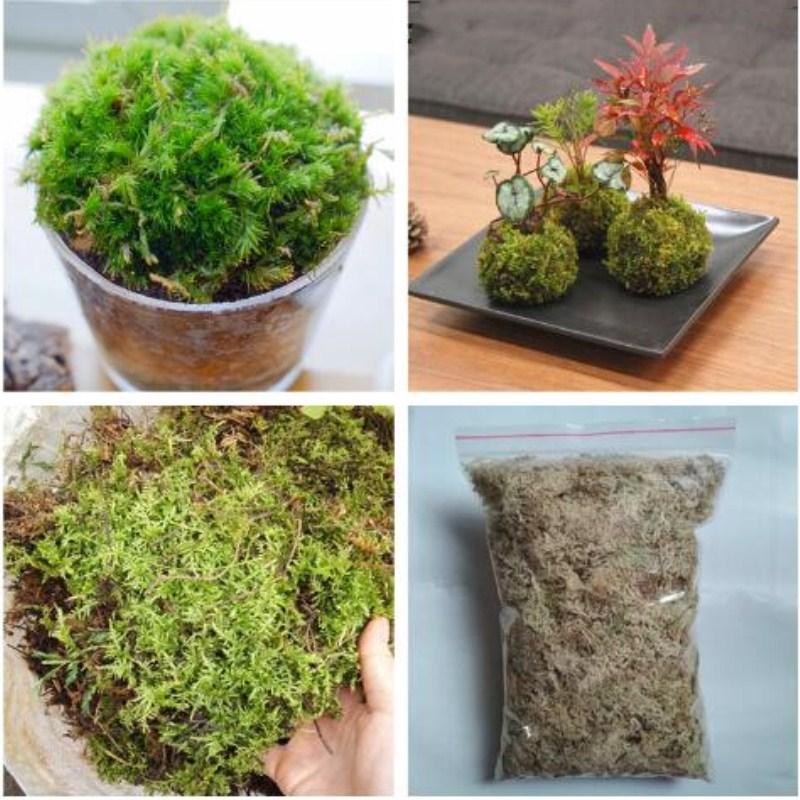 Мох сфагнум - использование для растений, полезные свойства, фото