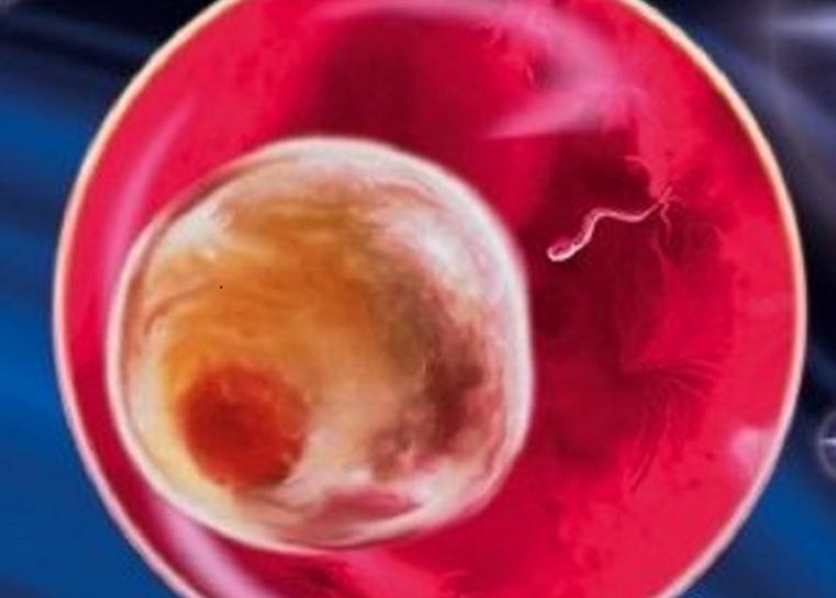 Беременность человека — википедия. что такое беременность человека