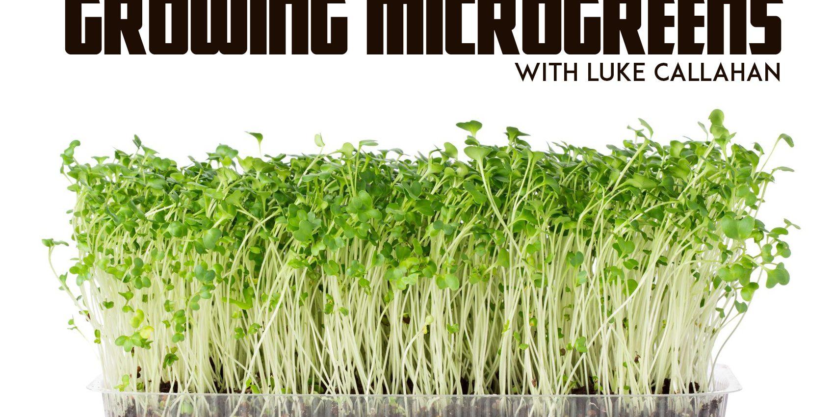 Что такое микрозелень? описание, особенности, выращивание и полезные свойства