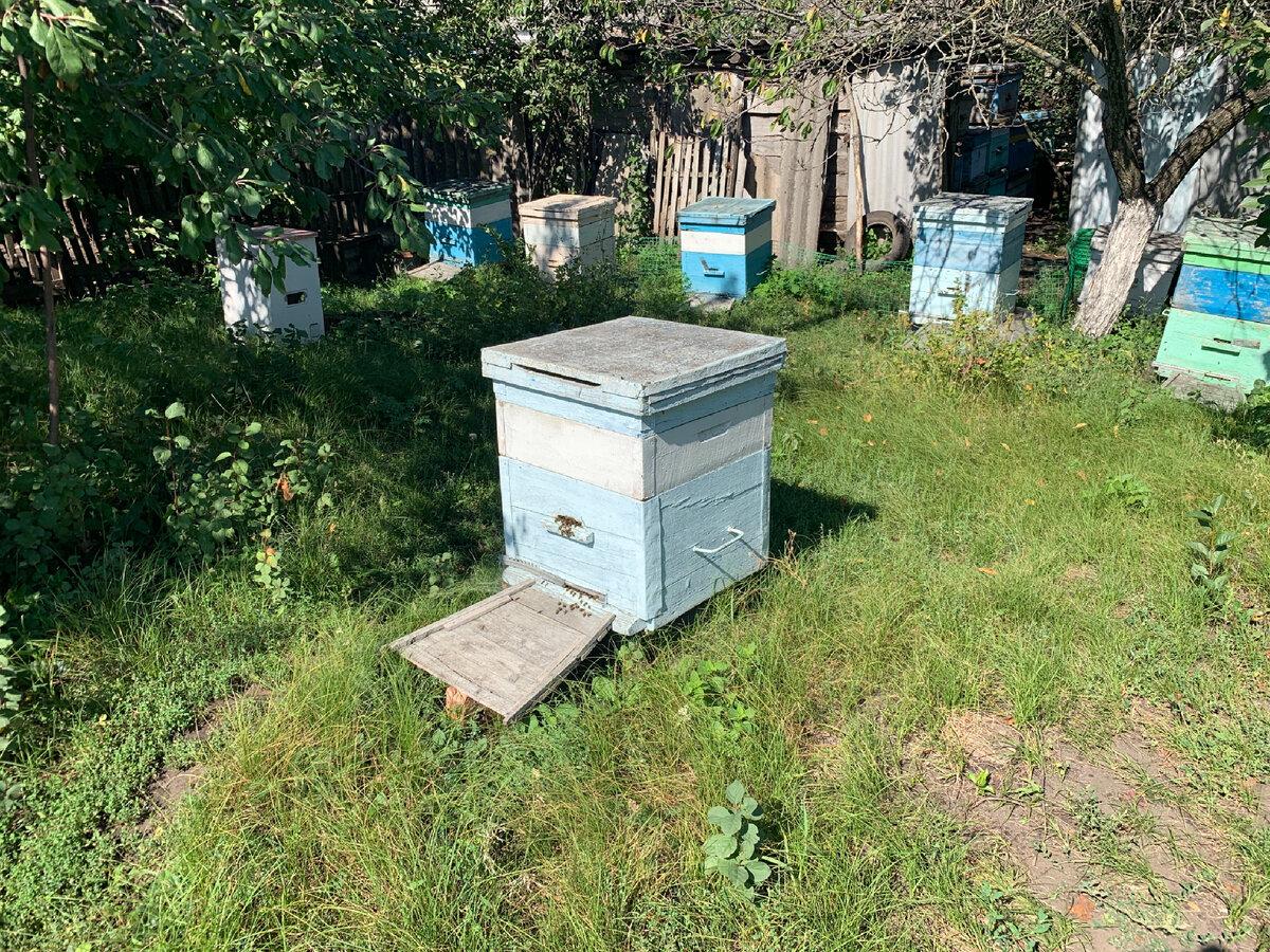 Терминология пчеловода: основные термины и определения