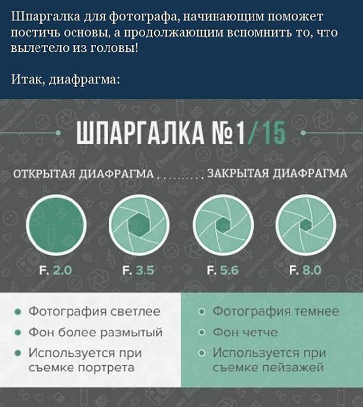 Д - диафрагма. что такое диафрагма?