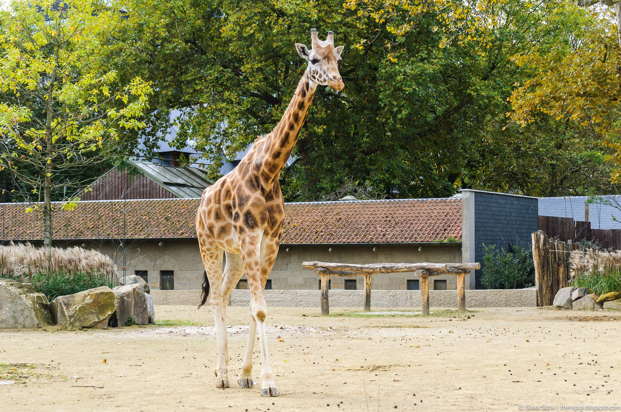 Екатеринбургский зоопарк — википедия. что такое екатеринбургский зоопарк