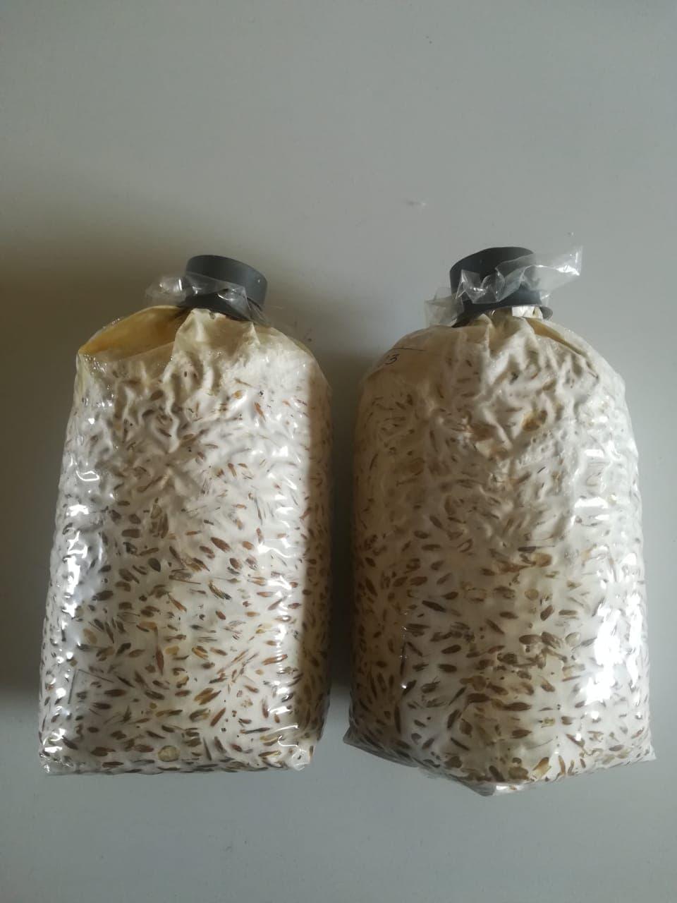 Что такое мицелий грибов у человека