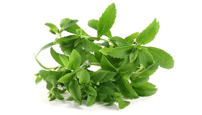 Стевия – что это за трава, полезные свойства и вред, применение продукта на ydoo.info