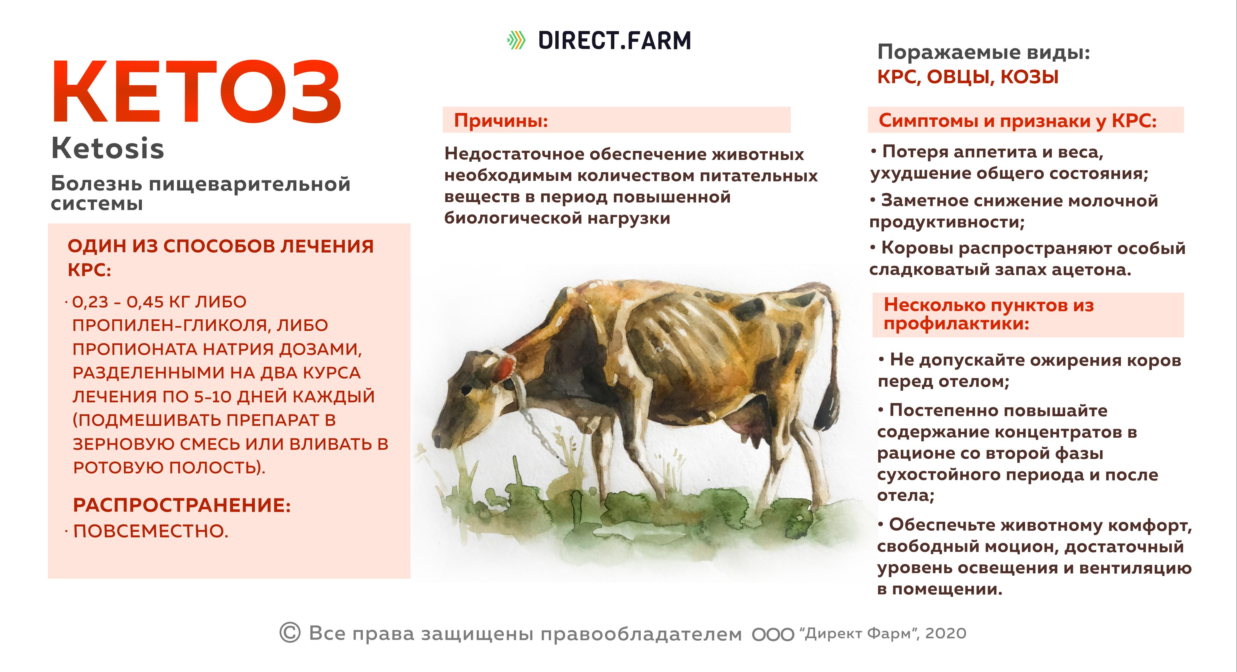 Кетоз у коров: симптомы, лечение, причины, признаки, и что это такое, как определить в домашних условиях, как избавиться народными средствами и иными методами?