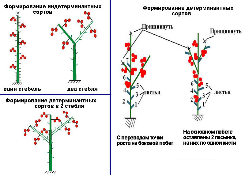 Что такое пасынкование помидор и как проводится этот процесс?