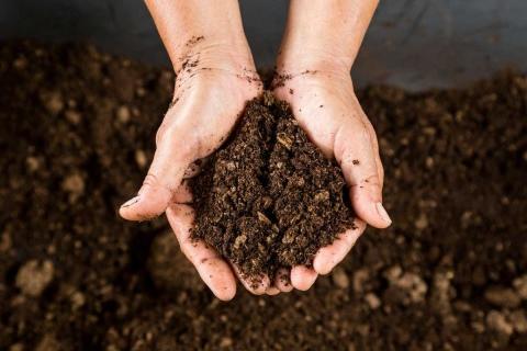 Забытый люпин. причины непопулярности этой зернобобовой культуры — журнал «агротехника и технологии» — агроинвестор