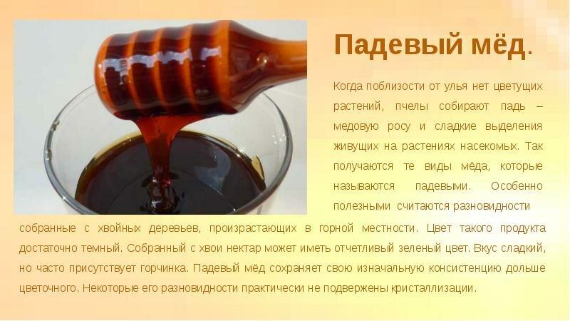 Падевый мед: что это такое, полезные свойства и противопоказания меда