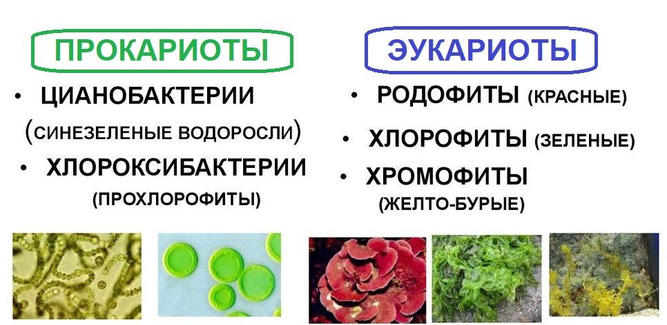 Какие растения называют споровыми: классификация, характерные признаки, как размножаются