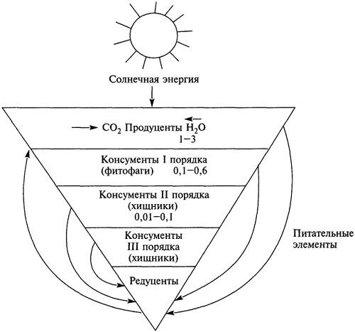Продуценты, консументы, редуценты – функции, примеры и роль в экосистеме