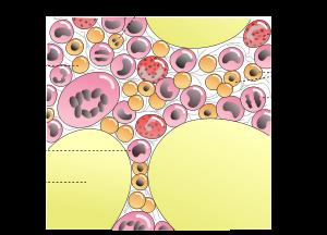 Говяжий костный мозг: полезные свойства и возможный вред