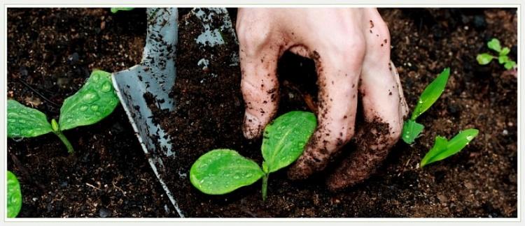 6 экологически безопасных способов повысить плодородие почвы | дела огородные (огород.ru)