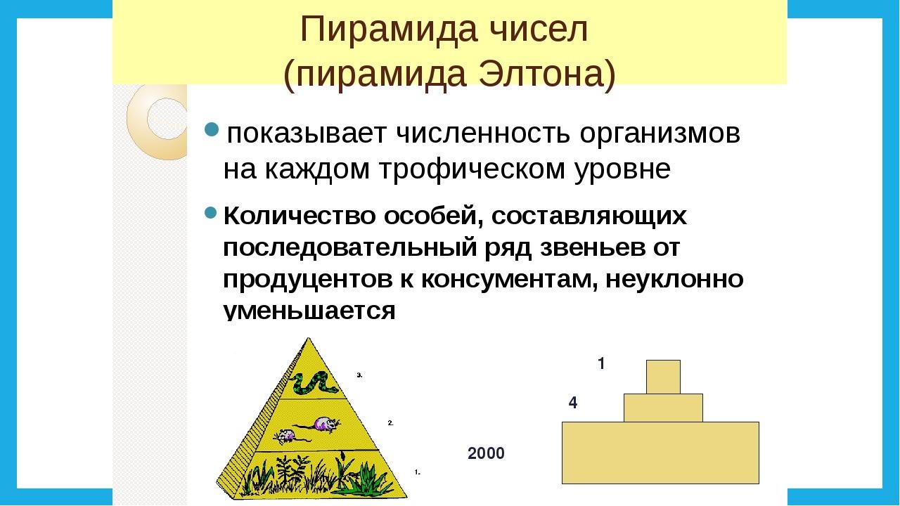 Экологическая пирамида - виды, характеристика и эффективность - помощник для школьников спринт-олимпик.ру