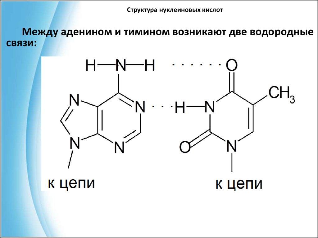 Нуклеиновая кислота — википедия