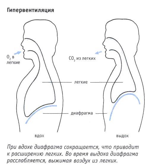Гипервентиляция легких (гиперпноэ): что это такое, симптомы, причины, последствия, как делать гипервентиляцию